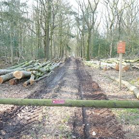 Voor de bouw van de Bok hebben we eikenhout nodig. Staatsbosbeheer zal een deel leveren