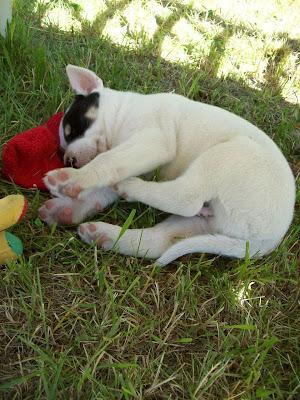Pies Pirat Nasz Haskatyńczyk :)