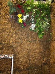 Mur vegetal en exposition sur l'ile ST MARTIN coté hollandais les plantes pour la création des murs végétaux proviennent de MIAMI ou des pépinières locales .