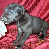 Stella @ 4 weeks