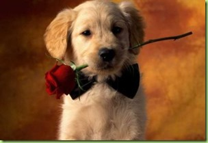 Valentines-Day-For-Pets-1.img_assist_custom