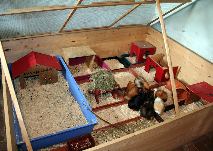 Les installa 39 chons les maisons de mes cochons d 39 inde for Parc d interieur