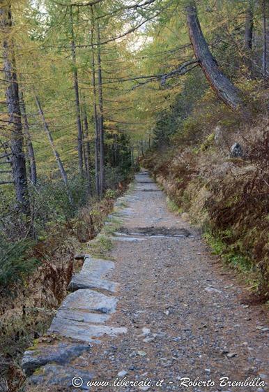 2015-10-11_Chiareggio-Porro_Valmalenco_025