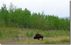Buffalo, Alaska Highway