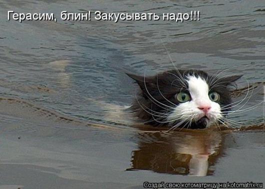1413567465_kotomatricy-23