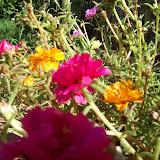 Gardening 2009 - 101_5199.JPG