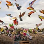 aves de competicion.jpg