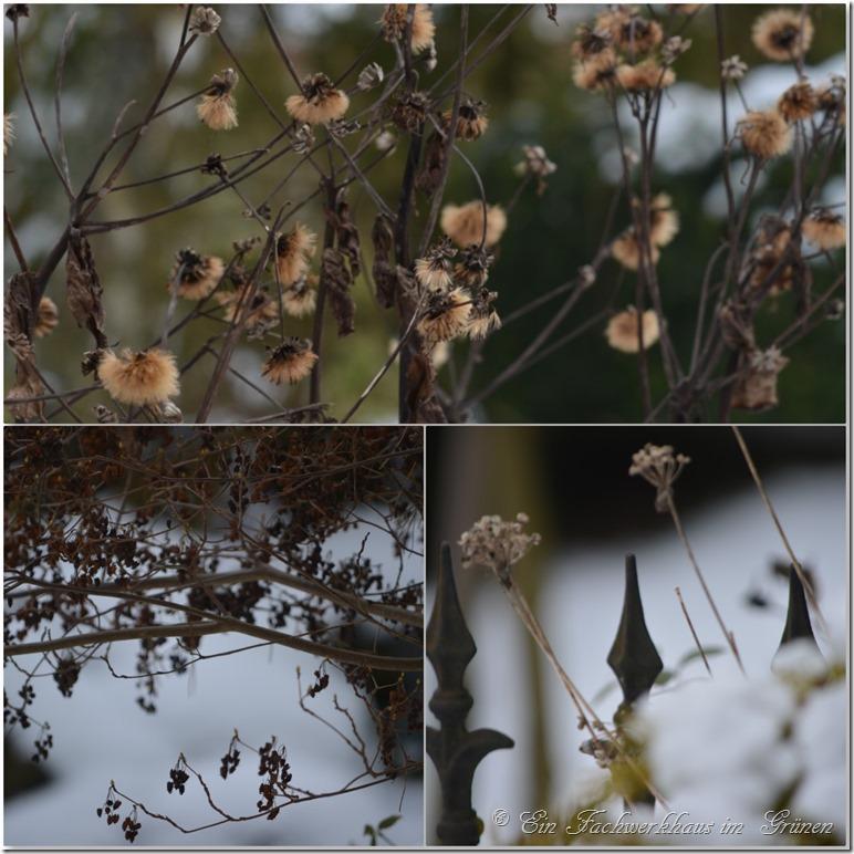Samenständer im Winter