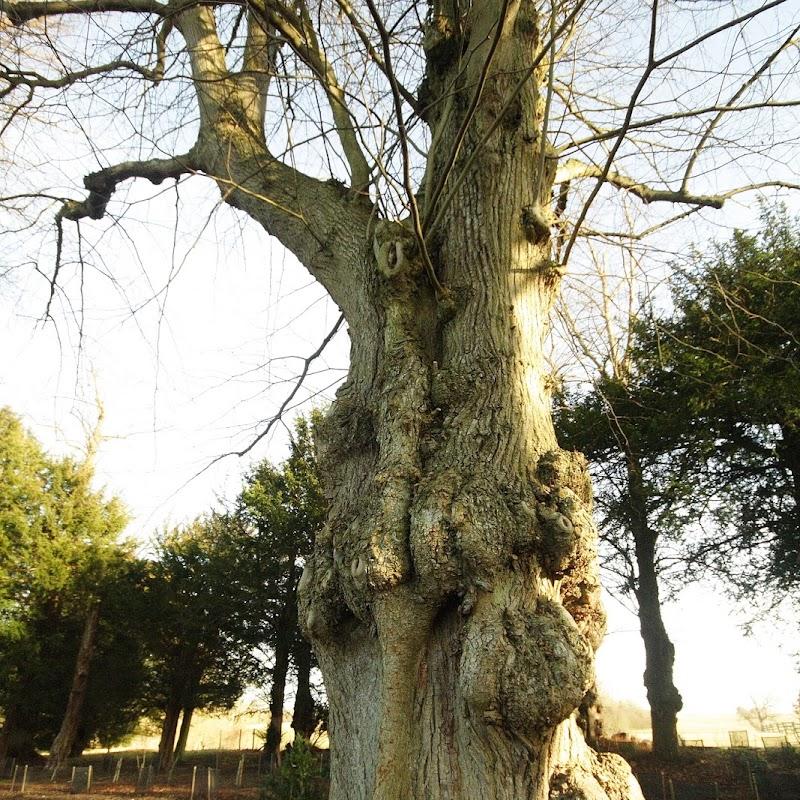 Stowe_Trees_39.JPG