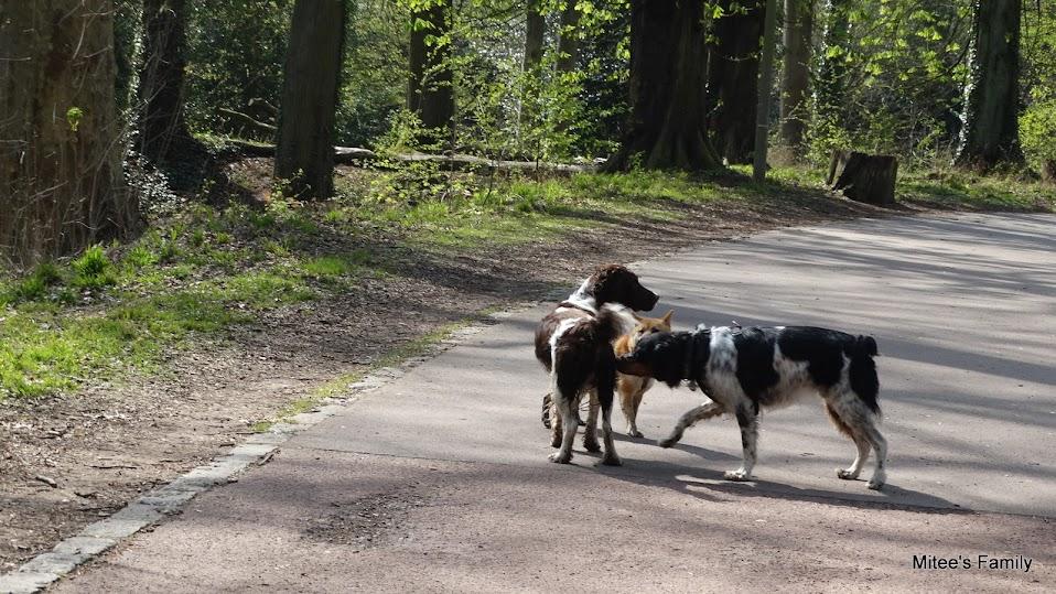 Balades canines en Nord (59)/Pas de Calais (62) - Boulogne-sur-Mer, Calais et Lille - Page 4 DSC01872