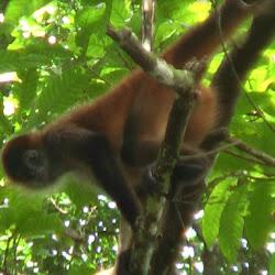 Tortuguero National Park Office's profile photo