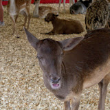 Fort Bend County Fair 2014 - 116_4272.JPG