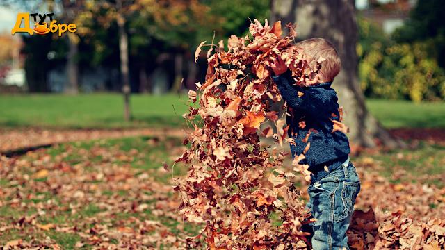Ідеї на осінь