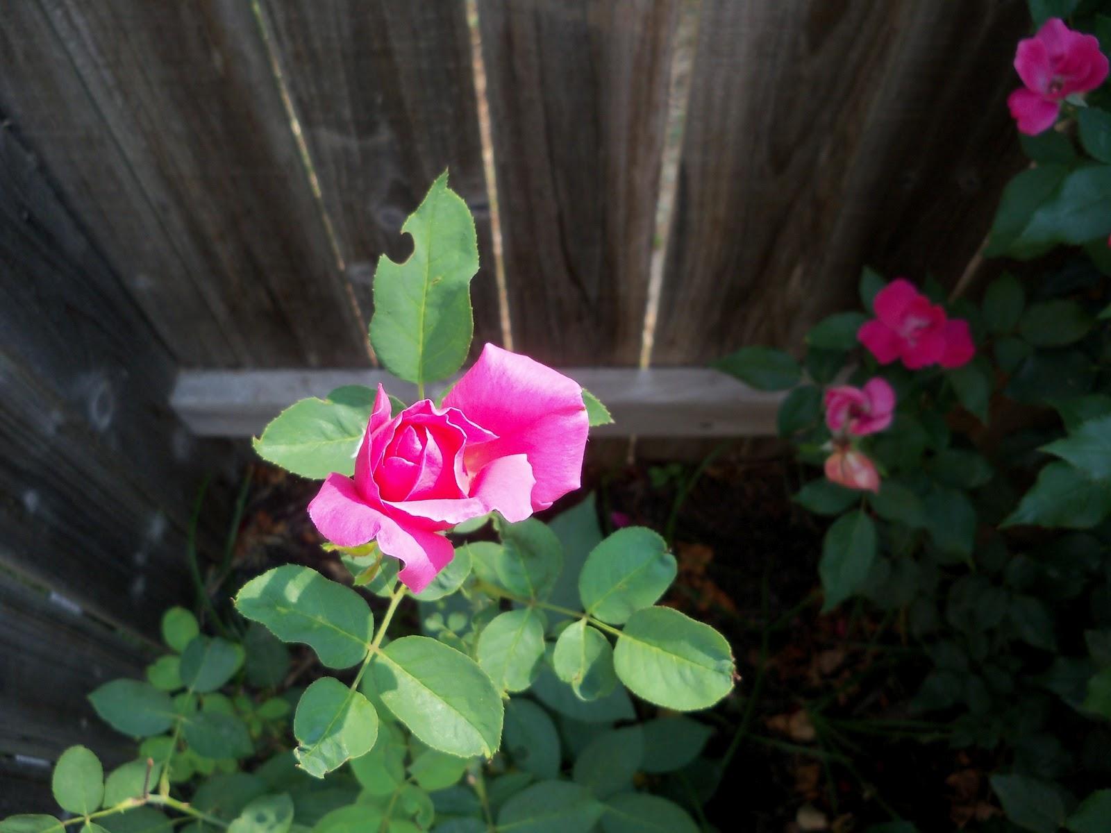 Gardening 2011 - 100_9335.JPG