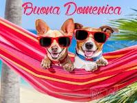 buona domenica buon giorno immagine con scritta cani con occhiali su amaca estate.jpg
