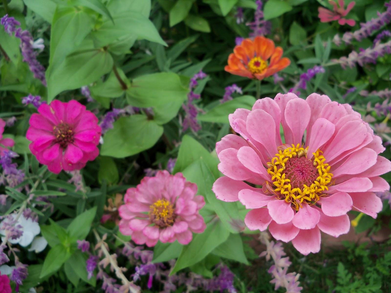 Gardening 2012 - 115_1989.JPG