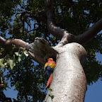 Guacamaya del zoológico de Isla Palma