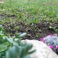 primavera-luminasioIMAG0209.jpg
