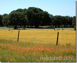 Texas Hill Country 003