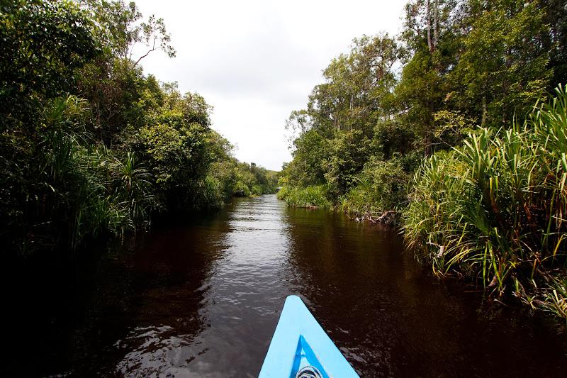Las aguas negras de un río en Borneo