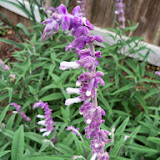 Gardening 2014 - 116_1741.JPG