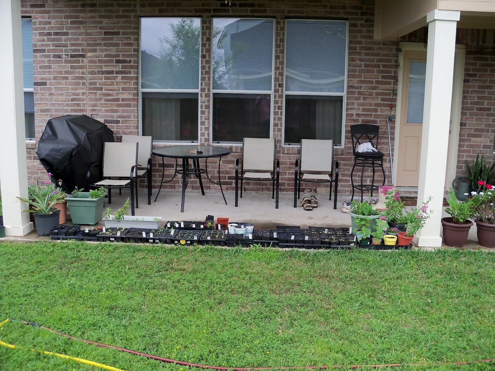 Gardening 2012 - 115_1390.JPG
