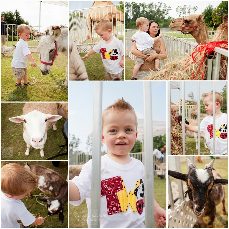2nd birthday party - barn themed with petting zoo