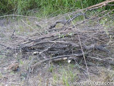 2年放置していた夏みかんの伐採後の木