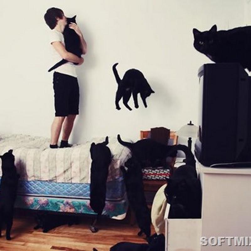Андриан Лупьен: «Сумасшедшие любители кошек»