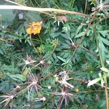 Gardening 2013 - IMG_20130523_192149.jpg