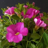 primavera-luminasioIMAG0232.jpg