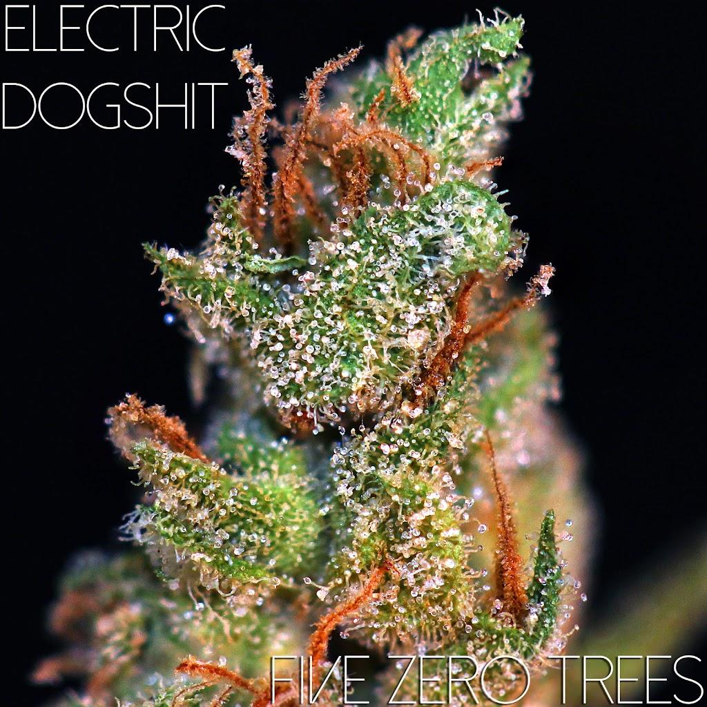 Electric Dogshit Macro 1