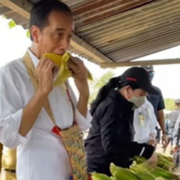 Jokowi Cuek Melahap Jagung Rebus, Warganet: Sumpah Aku Suka Ndesomu Pak