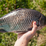 20160730_Fishing_Privitne_017.jpg