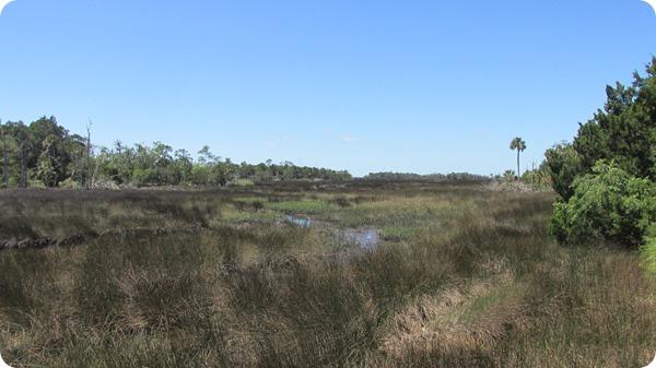 6 Wetlands