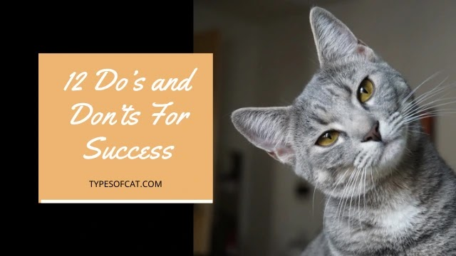 Cat Care: 12 Do's and Don'ts For Success