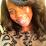 ButterflyintheCity Green's profile photo