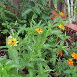 Gardening 2010, Part Two - 101_2162.JPG