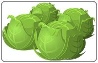 คำศัพท์ภาษาอังกฤษ_cabbage_Vegetable