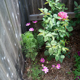 Gardening 2010, Part Two - 101_2743.JPG