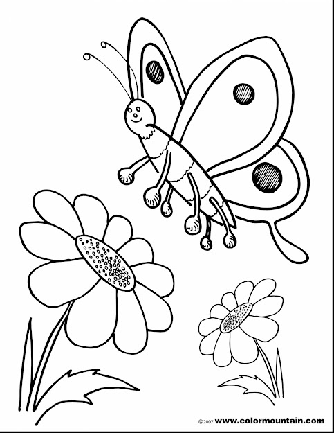 Outstanding Sunflower Butterfly Coloring Pages With Sunflower Coloring Page  And Sunflower Coloring Pages Free