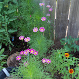 Gardening 2010, Part Two - 101_3057.JPG