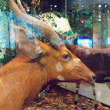 Houston Museum of Natural Science - 116_2777.JPG