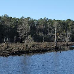 Fowl Marsh from Boat Feb3 2013 079