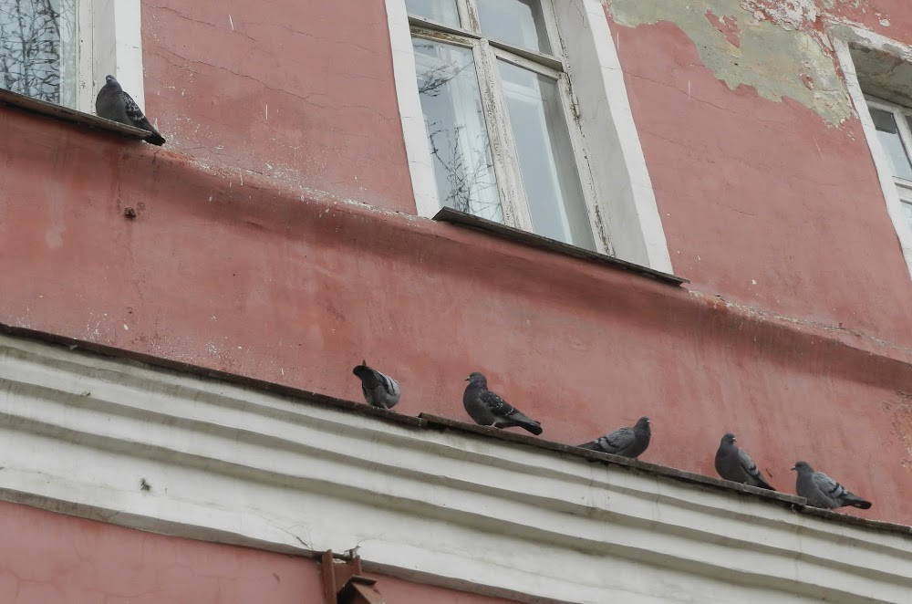 pigeons on a perch above, after being scared away from the sidewalk by Anna!