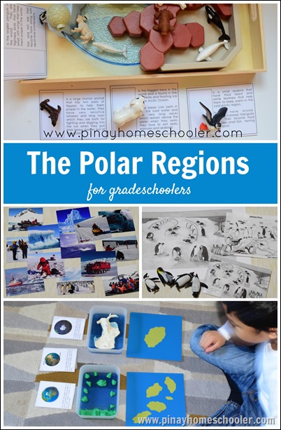 The Polar Regions (Arctic and Antarctic Unit) for Gradeschoolers