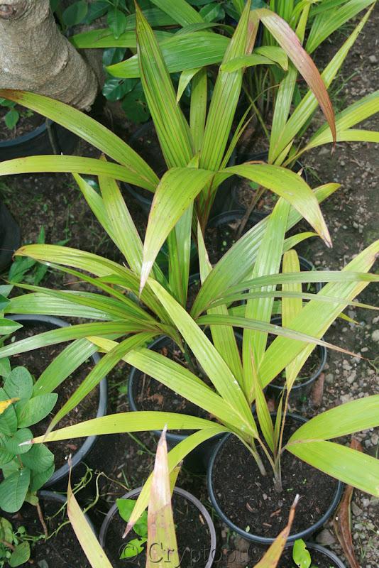 Futur jardin d'orchidées!!! - Page 2 IMG_3666