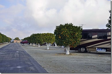 Orange Grove RV Park2