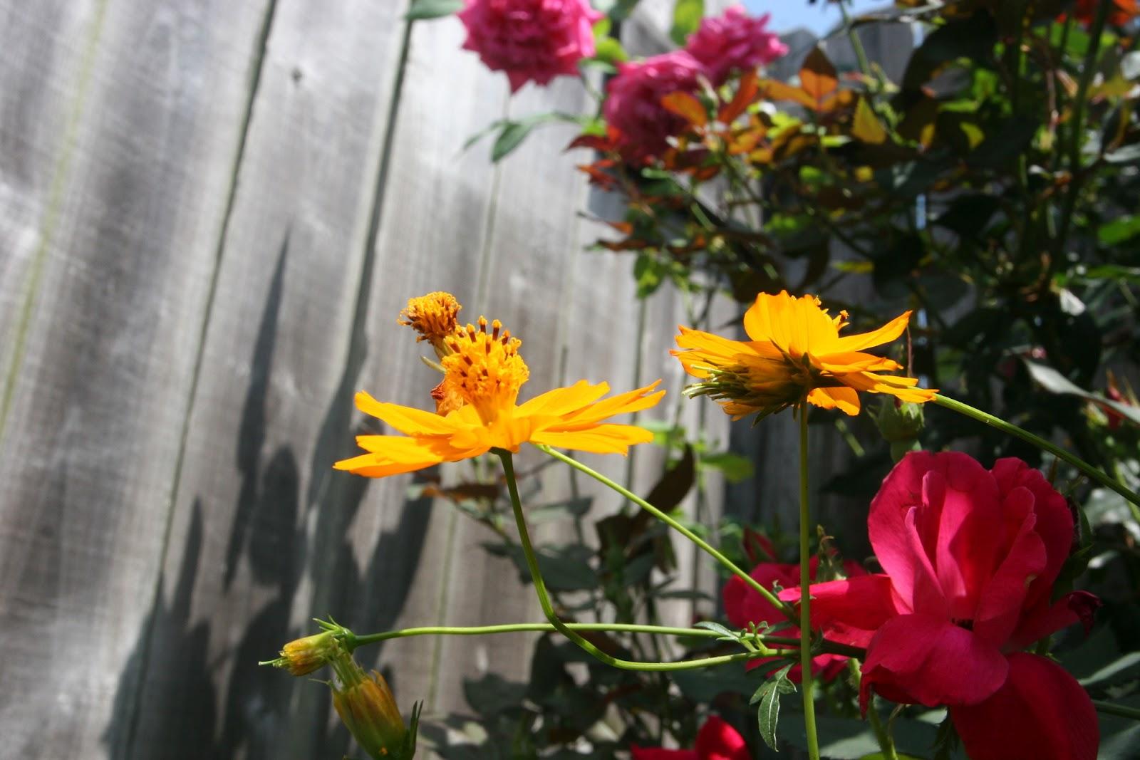 Gardening 2012 - IMG_3807.JPG