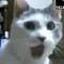https://lh3.googleusercontent.com/-MaOgsKJJQF0/AAAAAAAAAAI/AAAAAAAAAMU/VInyLrMm_VQ/photo.jpg?sz=64